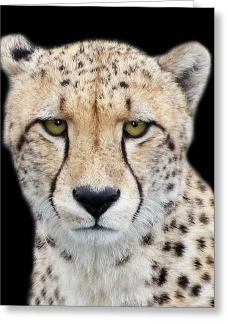 Greeting Card featuring the photograph Cheetah by Lynn Bolt