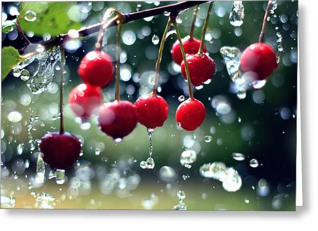 Cherries Greeting Card by Falko Follert