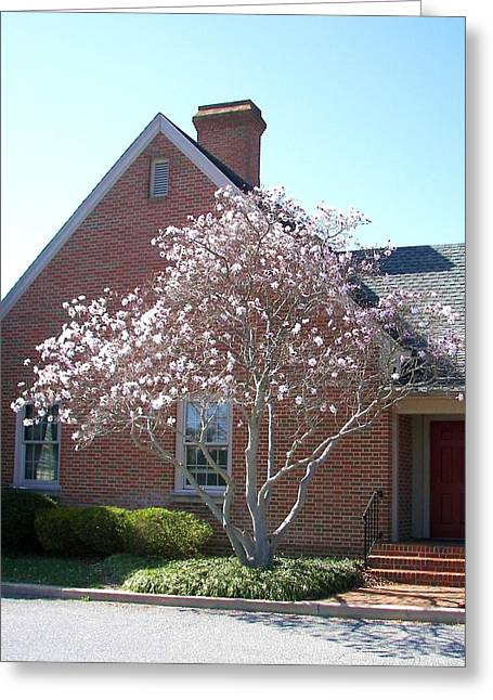 Greeting Card featuring the photograph Cherry Blossom by Pamela Hyde Wilson