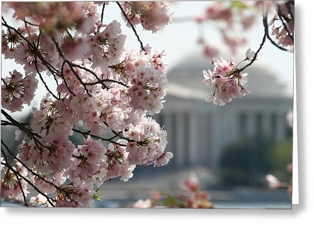 Cherry Blossom Washington Greeting Card by Valia Bradshaw