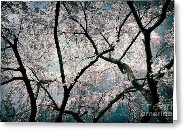 b51a6d0db37c Yoshino Cherry Tree Greeting Cards (Page #2 of 5) | Fine Art America