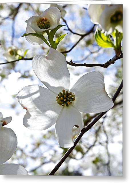 Cherry Blossoms I Greeting Card by Glennis Siverson