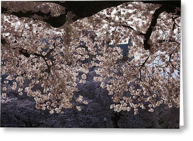 Greeting Card featuring the photograph Cherry Blossoms by Jerry Cahill