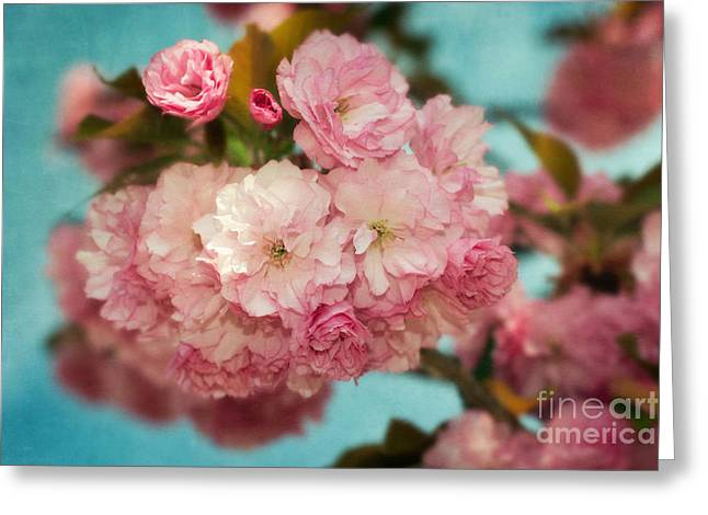 Cherry Blossoms Kanzan Three Greeting Card by Susan Isakson