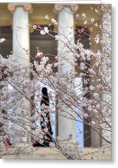 Cherry Blossoms Washington Dc 1 Greeting Card
