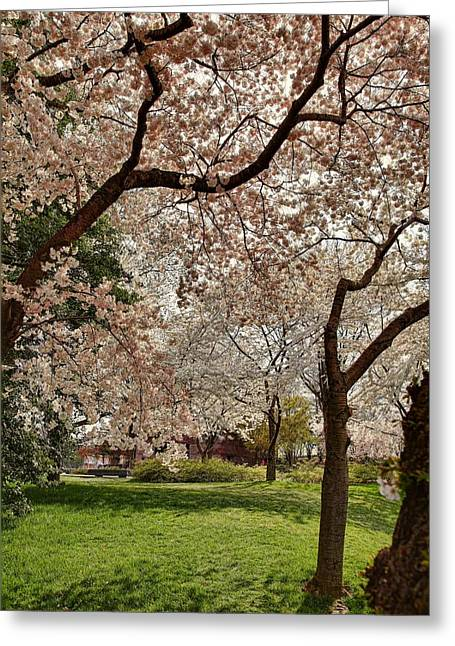 Cherry Blossoms Washington Dc 5 Greeting Card by Metro DC Photography