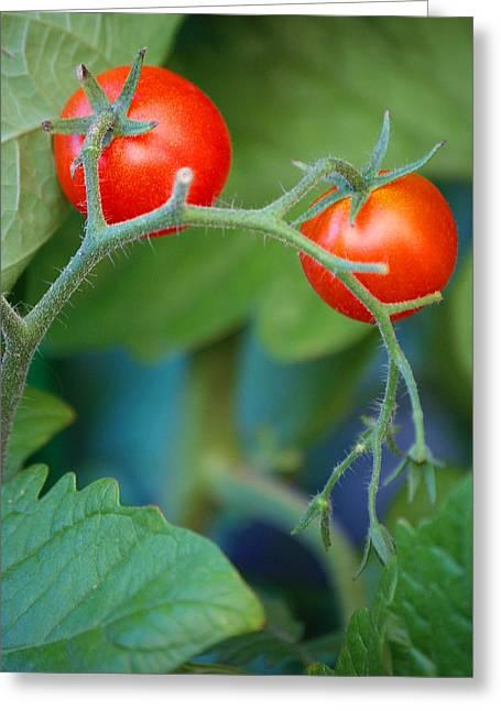 Cherry Greeting Card by Miranda Mehrer