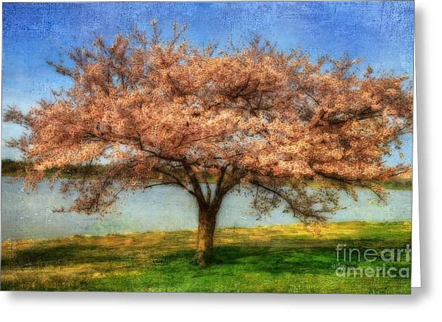 Cherry Tree Greeting Card by Lois Bryan