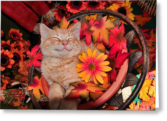 Cheshire Cat Dreaming Of Catching Mice Greeting Card by Chantal PhotoPix