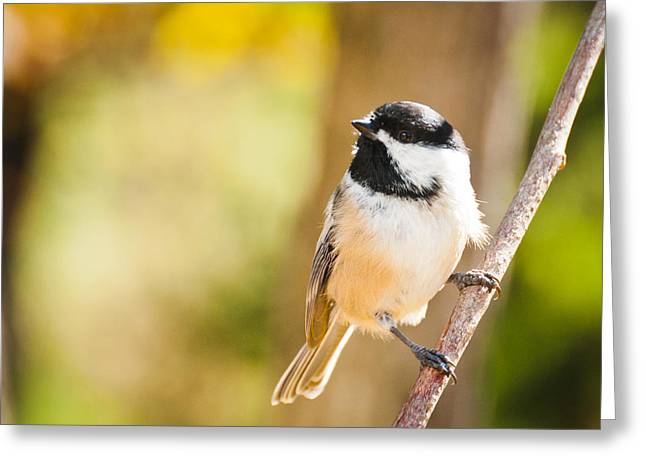 Greeting Card featuring the photograph Chickadee by Cheryl Baxter