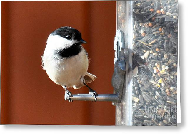 Greeting Card featuring the photograph Chickadee by Cheryl McClure
