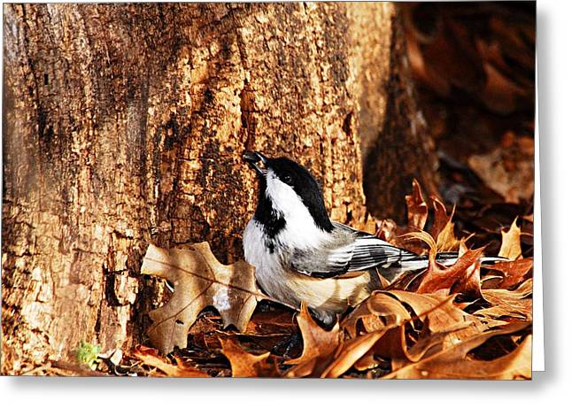Chickadee With Sunflower Seed Greeting Card by Larry Ricker