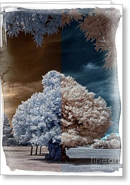Childhood Oak Tree - Infrared Photography Greeting Card by Steven Cragg