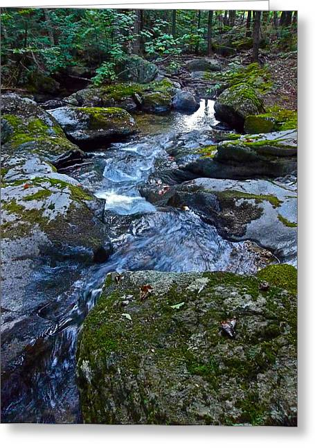 Childs Brook Summer 23 Greeting Card by George Ramos
