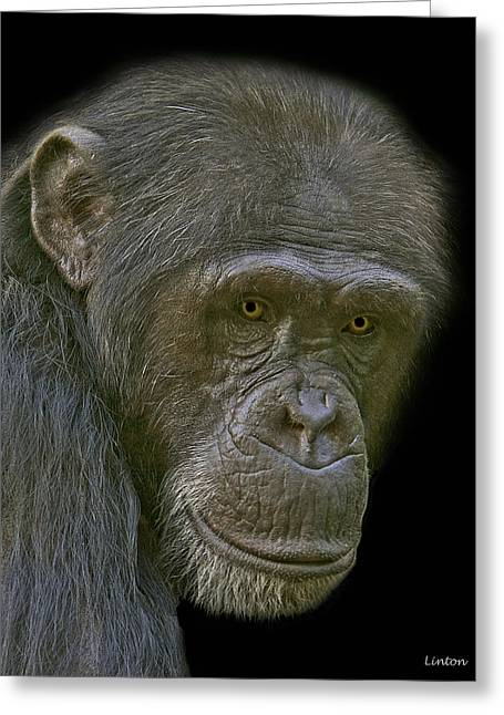 Chimpanzee Portrait Greeting Card by Larry Linton