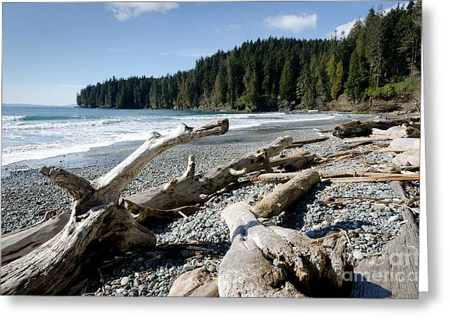 China Driftwood China Beach Juan De Fuca Provincial Park Bc Greeting Card by Andy Smy