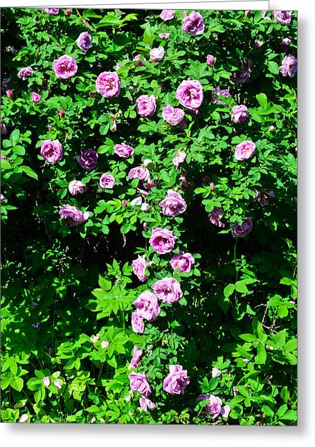 China Rose Greeting Card