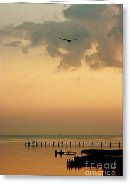 Greeting Card featuring the photograph Chincoteaque Island by Nicola Fiscarelli