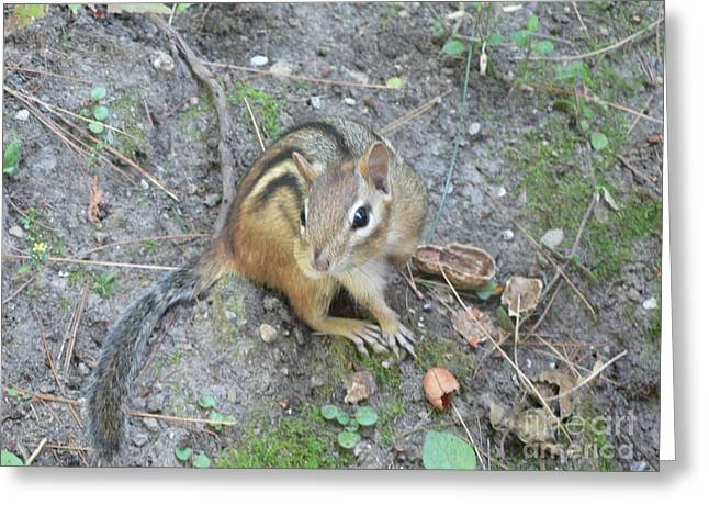 Chipmunk Feast Greeting Card