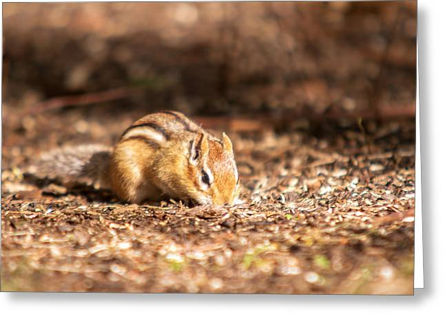 Greeting Card featuring the photograph Chipmunk by Josef Pittner