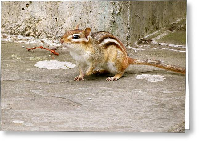 Chipmunk Scurry Greeting Card