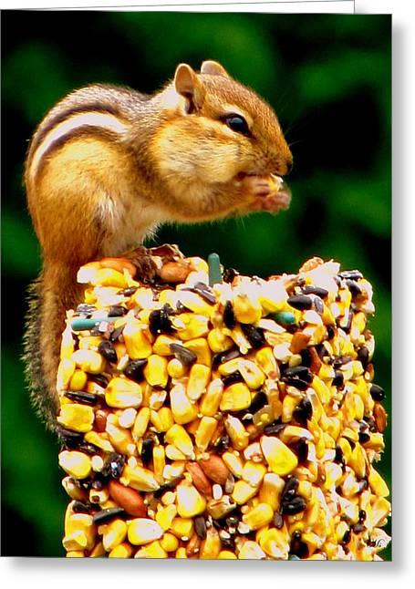 Chipmunk Take Out Greeting Card by Ms Judi