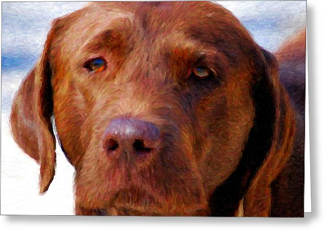 Chocolate Lab  Dog  Greeting Card