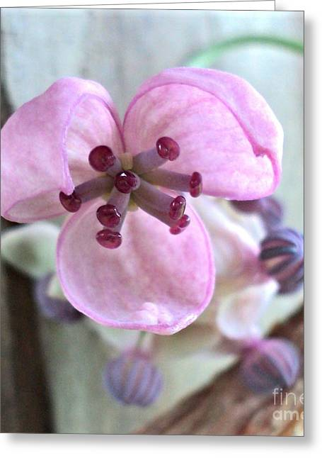 Chocolate Vine Young Bloom Macro Greeting Card by Padre Art