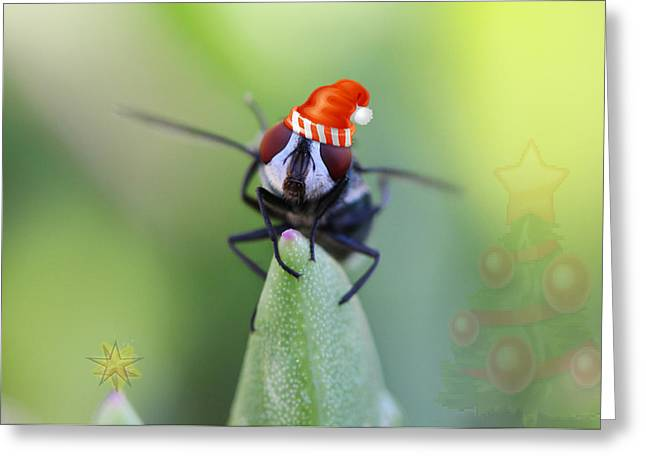 Christmas Blow Fly Greeting Card by Ronel Broderick