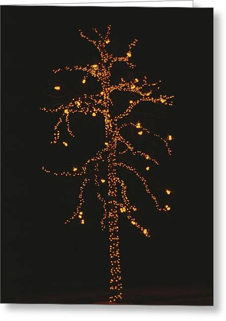 Christmas Lights Outline A Tall Tree Greeting Card