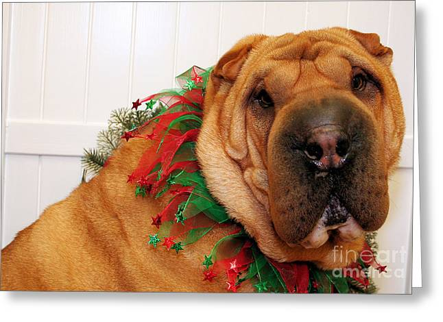Christmas Portraits - Chinese Shar Pei Greeting Card by Renae Laughner