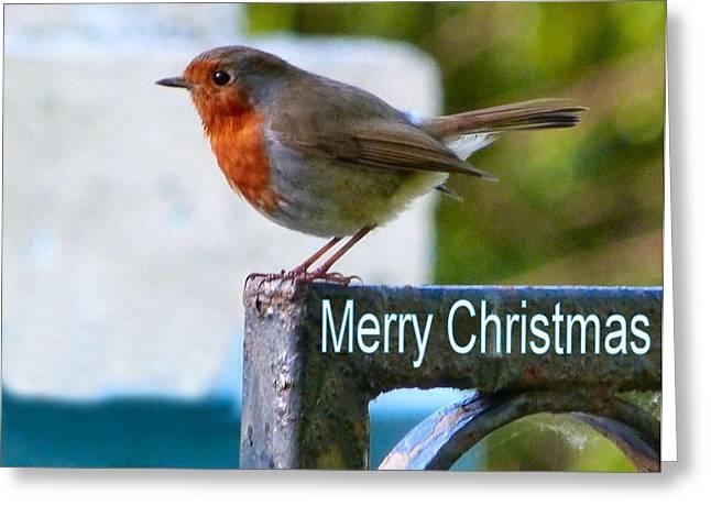 Christmas Robin Greeting Card by Debra Collins