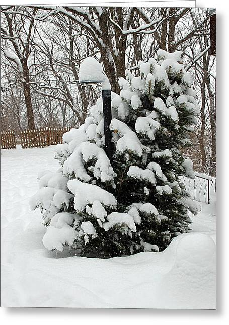 Christmas Tree Greeting Card by Aimee L Maher Photography and Art Visit ALMGallerydotcom