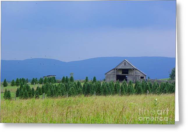 Greeting Card featuring the photograph Christmas Tree Farm by Eve Spring