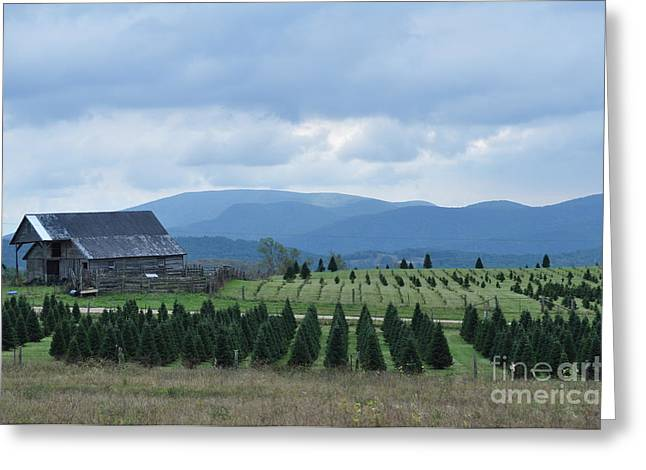 Christmas Trees Greeting Card by Lenora Berch
