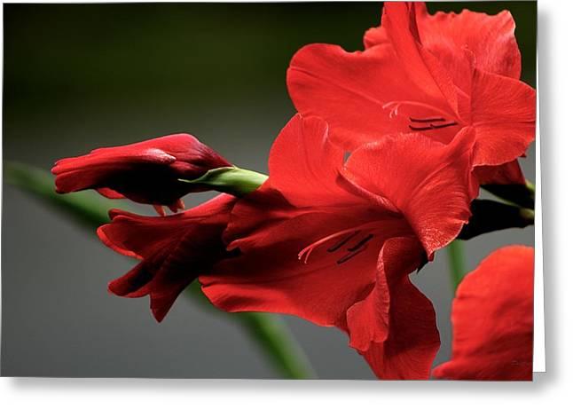 Chromatic Gladiola Greeting Card by Deborah  Crew-Johnson
