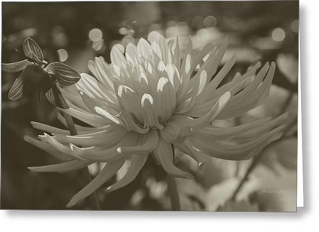 Chrysanthemum In Bloom Greeting Card by Xueling Zou