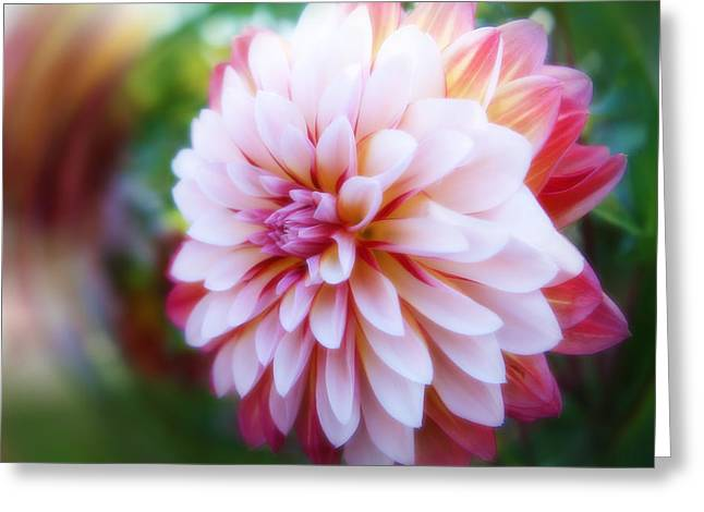 Chrysanthemum Revelation Greeting Card
