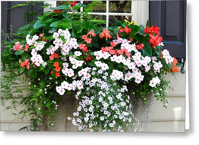 Church Street Window Box Greeting Card by Lori Kesten