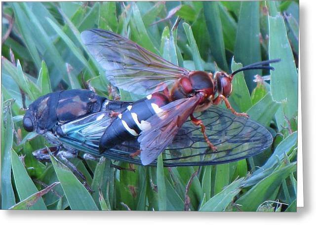 Cicada Killer Greeting Card