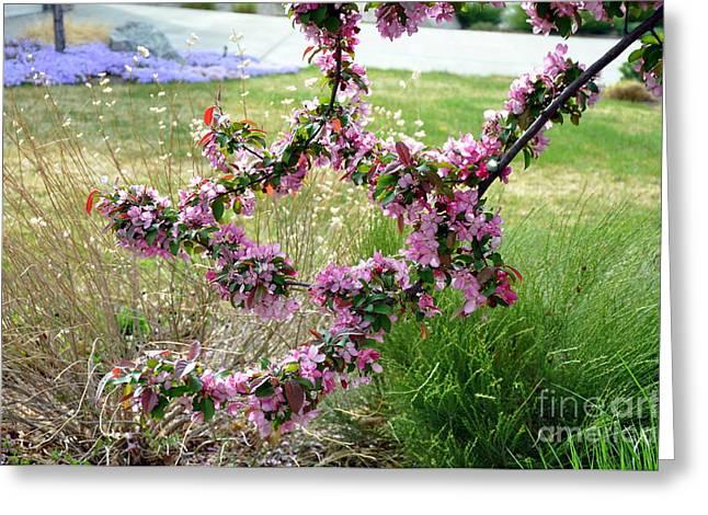Circle Of Blossoms Greeting Card