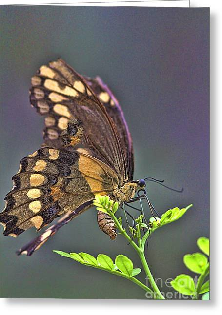 Circle Of Life Greeting Card by Anne Rodkin