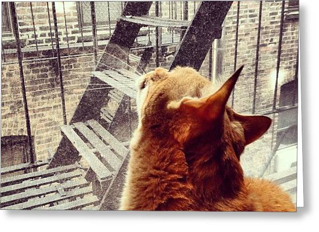 City Cat And Fire Escapes Greeting Card