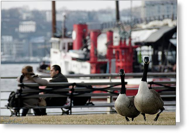 City Geese Greeting Card