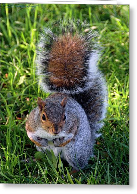 City Squirrel Greeting Card