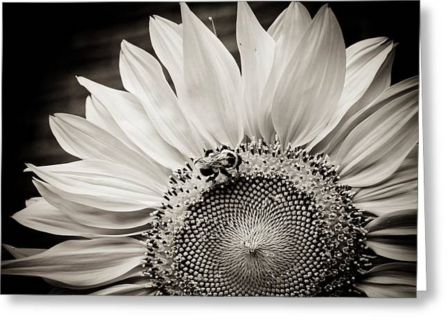 Greeting Card featuring the photograph Classic Sunflower by Sara Frank
