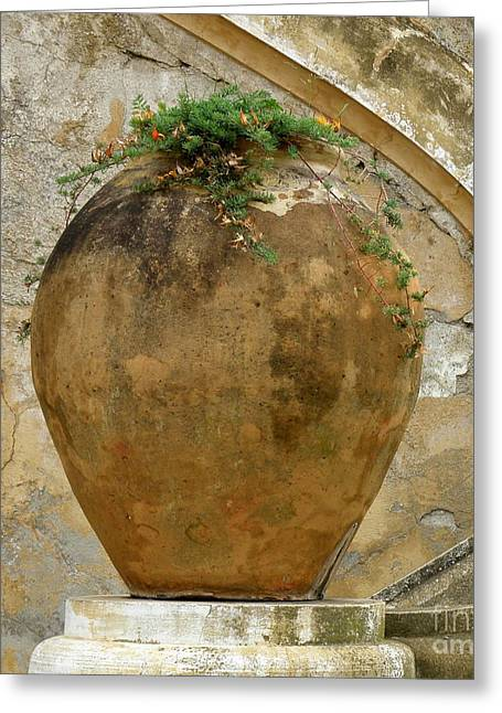 Greeting Card featuring the photograph Clay Pot by Lainie Wrightson