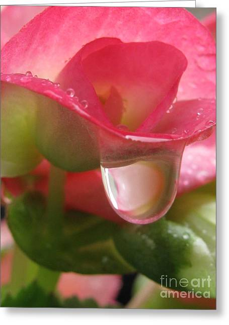 Cleansing Photography Greeting Card by Tina Marie