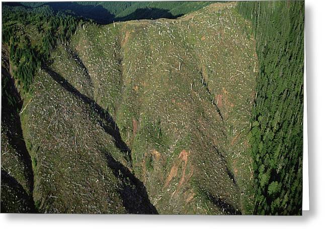 Clear Cutting, Olympic National Park Greeting Card