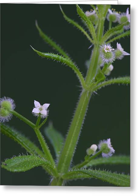 Greeting Card featuring the photograph Cleavers by Daniel Reed